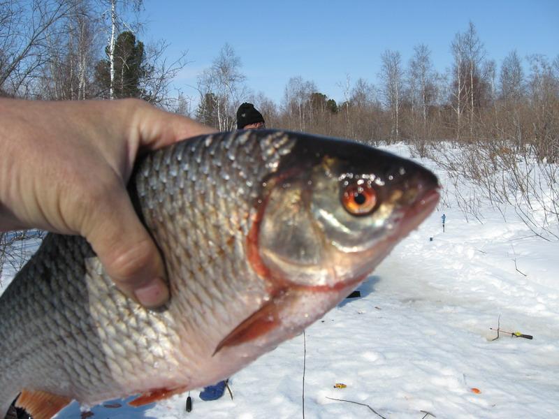 ловить рыбу в хмао